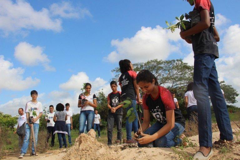 plantacao meio ambiente